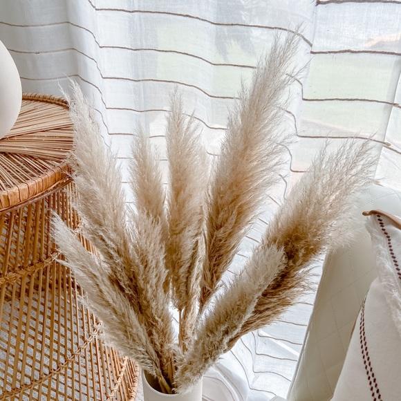 Fluffy Pampas Grass 10 stems